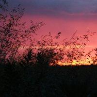 Закат в траве. :: Натали