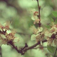 веточки-цветочки :: Катерина Лячок