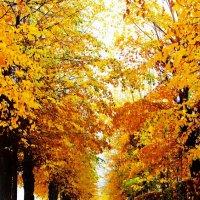Золотая осень :: Павел Сухоребриков