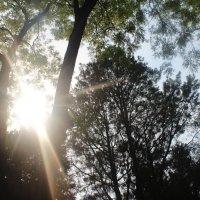 В саду Императрицы :: Мария Лебедева