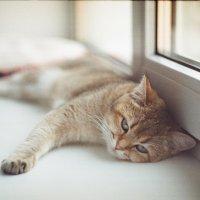 Усталая кошка :: Екатерина Чалая
