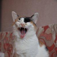 кошка Маша :: Алиса Садыйкова