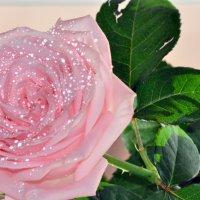 роза :: Алиса Садыйкова