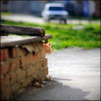 Кот рыжий :: Василий Микульский