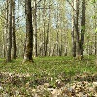 Весна в старом парке :: Елена Перевозникова