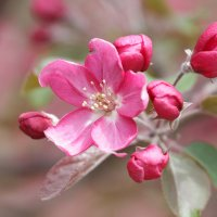 Цветок :: Roman Pautov