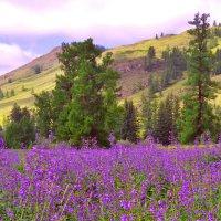 Цветная поляна :: юрий Амосов