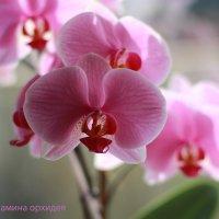 Царица цветов :: Алла Шупик