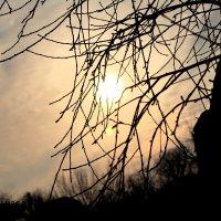 Яблоневый закат :: Алла Шупик