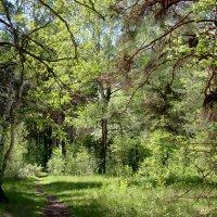 В лесу :: Александр Садовский
