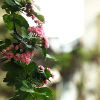 Розовые цветочки :: Edgars Silinieks