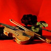 скрипка и роза :: meltzer