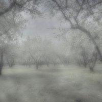 коломенское туман :: юрий макаров