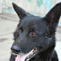 Dog :: Arina Kekshoeva