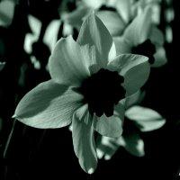 black and white :: Igor Moga