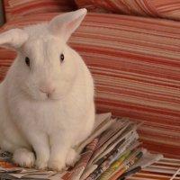 белый кролик :: Nina Delgado
