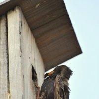 Кормление птенцов :: Жанна Мальцева
