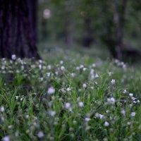 Весна в парке :: Сергей Дудников