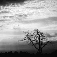Засохшее дерево :: Валерий Молоток