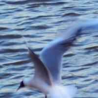 чайка :: Венера Хадиева
