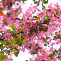 вишня цветет :: Александра Strix