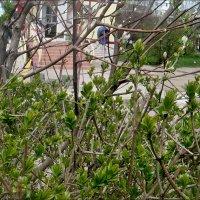 В мечтах о весне :: Нина Корешкова