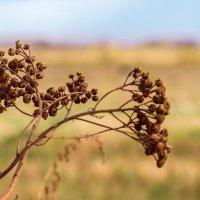 Травинки - былинки... :: Елена Бразис