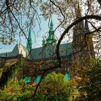 Вид на собор Святого Вита. :: Михаил Пименов