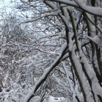 Зимние дорожки :: Виктория Браун