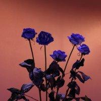 Про цветы и вазу :: Виктор Коршунов