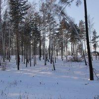 Снег:мой снег-января леденящая пена: :: Андрей