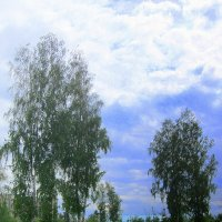 Про весну. :: Мила Бовкун