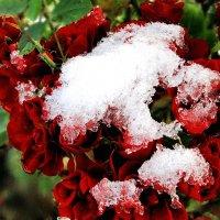 первый снег :: Нина