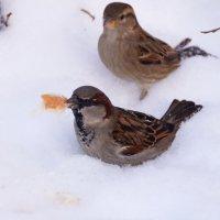 Птахи :: kolyeretka