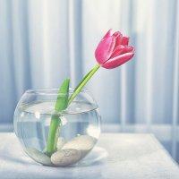 весна уже близко :: Наталья