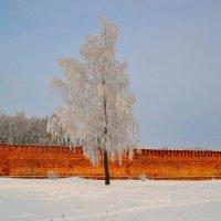 Одинокая берёза на фоне Крепостной стены :: Милешкин Владимир Алексеевич