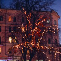 яркое дерево. :: Света Кондрашова