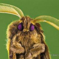 Портрет ночного мотылька :: Денис Штейн