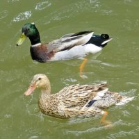 На реке Киндерка :: Наиля