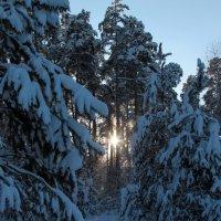 Зимняя сказка :: Эльвира Сагдиева