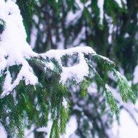 зима :: Ванда Азарова