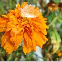 Умытая снежной росой :: Лидия (naum.lidiya)
