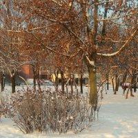 И зима бывает яркой... :: Валентина Жукова