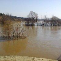 Разлилась река лужа :: MARIYA