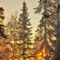 Солнце с дебрей выползало... :: Сергей Чиняев