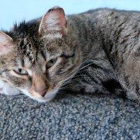 Кошка :: Елена Фалилеева-Диомидова