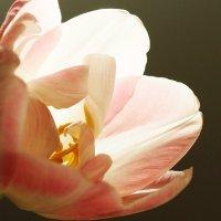 Улыбка солнечной весны :: Swetlana V