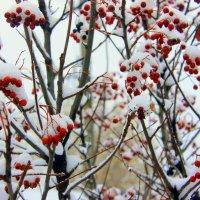 Зимняя рябинушка. :: Валентина ツ ღ✿ღ