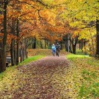 Старый парк :: Николай Танаев
