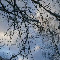 Узоры Зимы... :: Алёна Савина